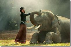 relacion humanos Sabes como introducir a un personaje animal en tu novela de fantasía
