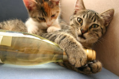How to serve wine to a cat