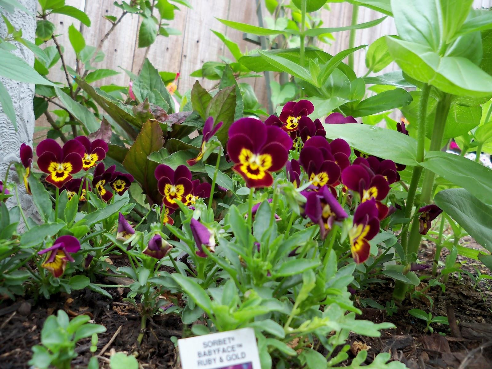 Gardening 2011 - 100_7362.JPG