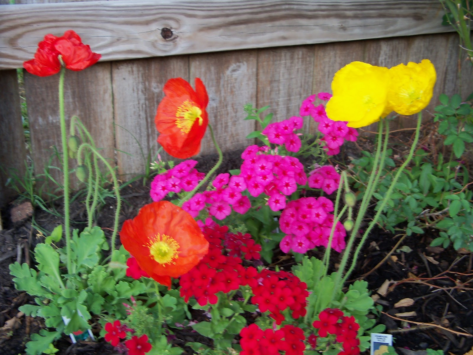 Gardening 2011 - 100_7112.JPG