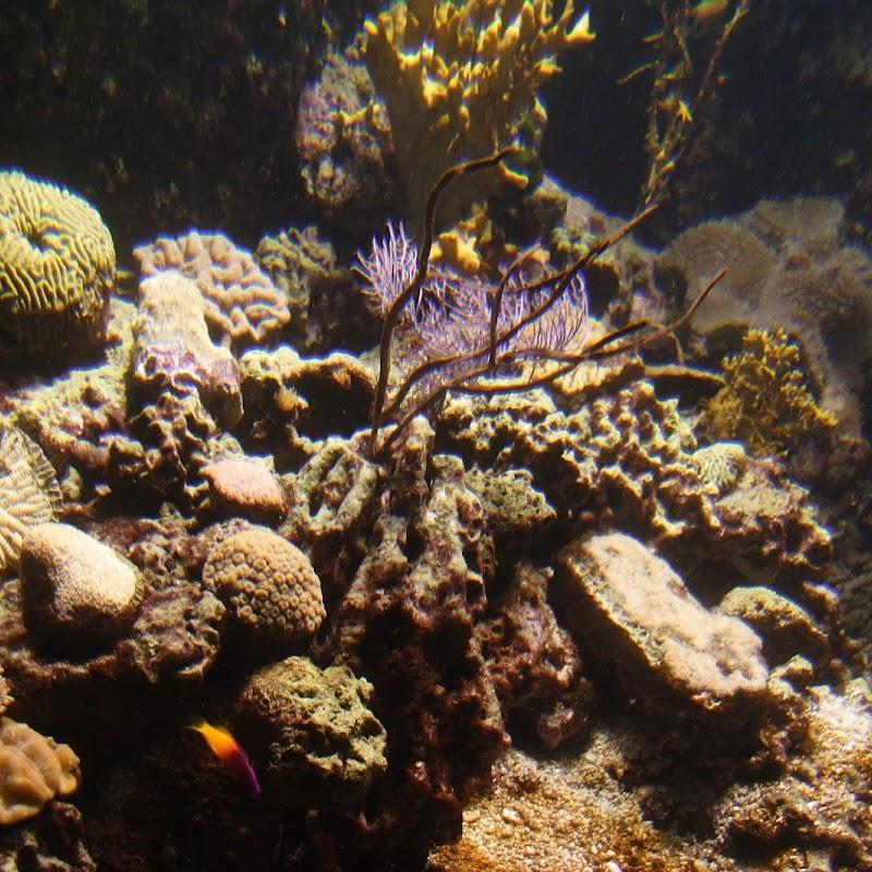 Aquarium_21.jpg