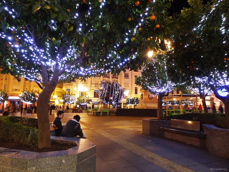 luces navidad, naranjos, plaza tendillas, árboles iluminados, neón, córdoba, españa, navidad, festividad, decoración navideña