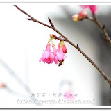 櫻花與福袋 - DSC_0101.jpg