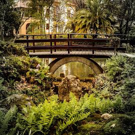 A ponte do parque by Carlos Costa - City,  Street & Park  City Parks ( aveiro, portugal, city park, bridge, park )