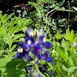 Gardening 2013 - 115_6206.JPG