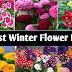 सर्दियों में उगाये जाने वाले फूलों के पौधे
