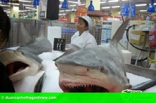 Hình 3: Hãi hùng cá sấu nguyên con, cá mập được bày bán trong siêu thị