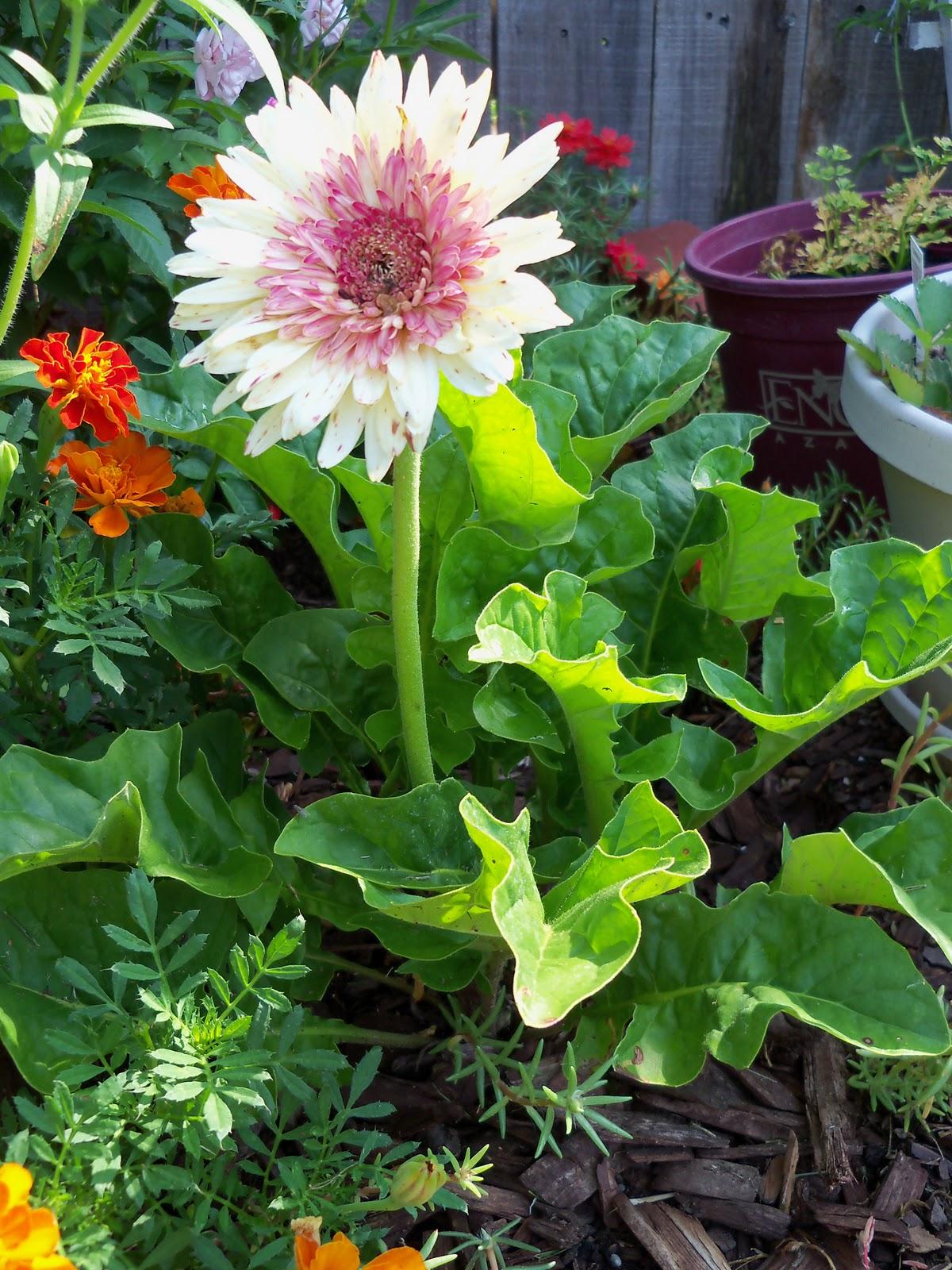 Gardening 2010, Part Two - 101_3268.JPG