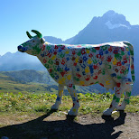 colorful cow welcoming you on the First in Grindelwald, Bern, Switzerland