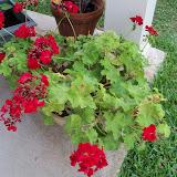 Gardening 2011 - 100_8937.JPG
