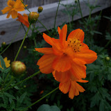 Gardening 2011 - 100_8675.JPG