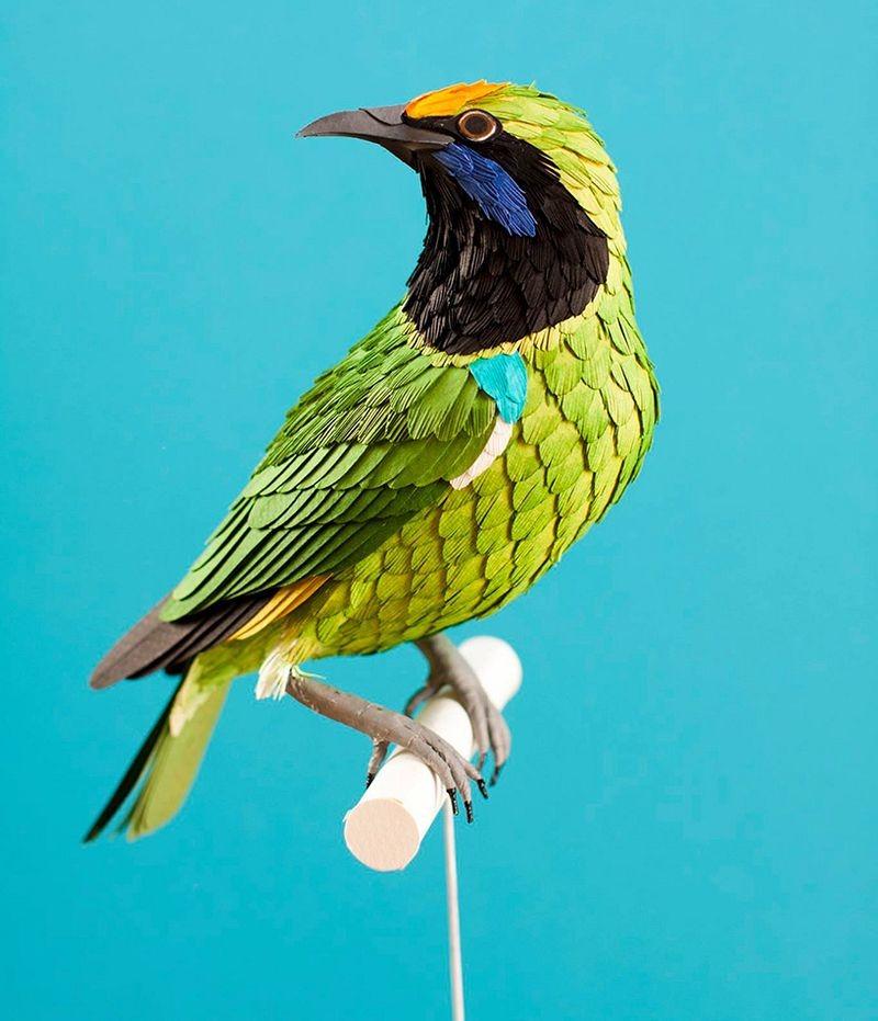 diana-beltran-herrera-birds-21