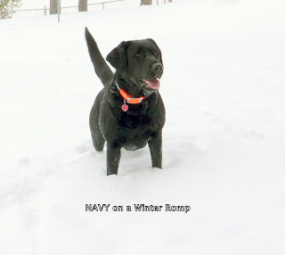 Navy on a Winter Romp