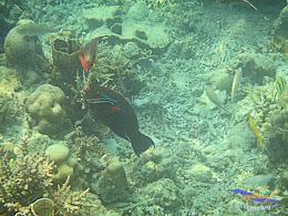 pulau harapan 8-9 nov 2014 diro 15
