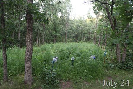 JUly 24 Wild garden