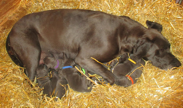 Saffy & her babies @ 10 days