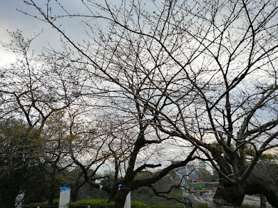 IMG_20170324_061338.jpg