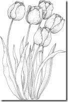 tulpen001