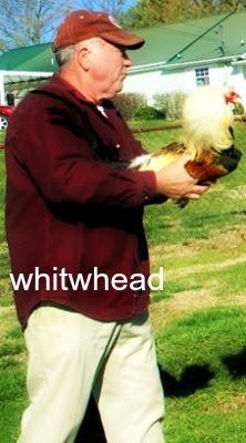 whitwhead.jpg