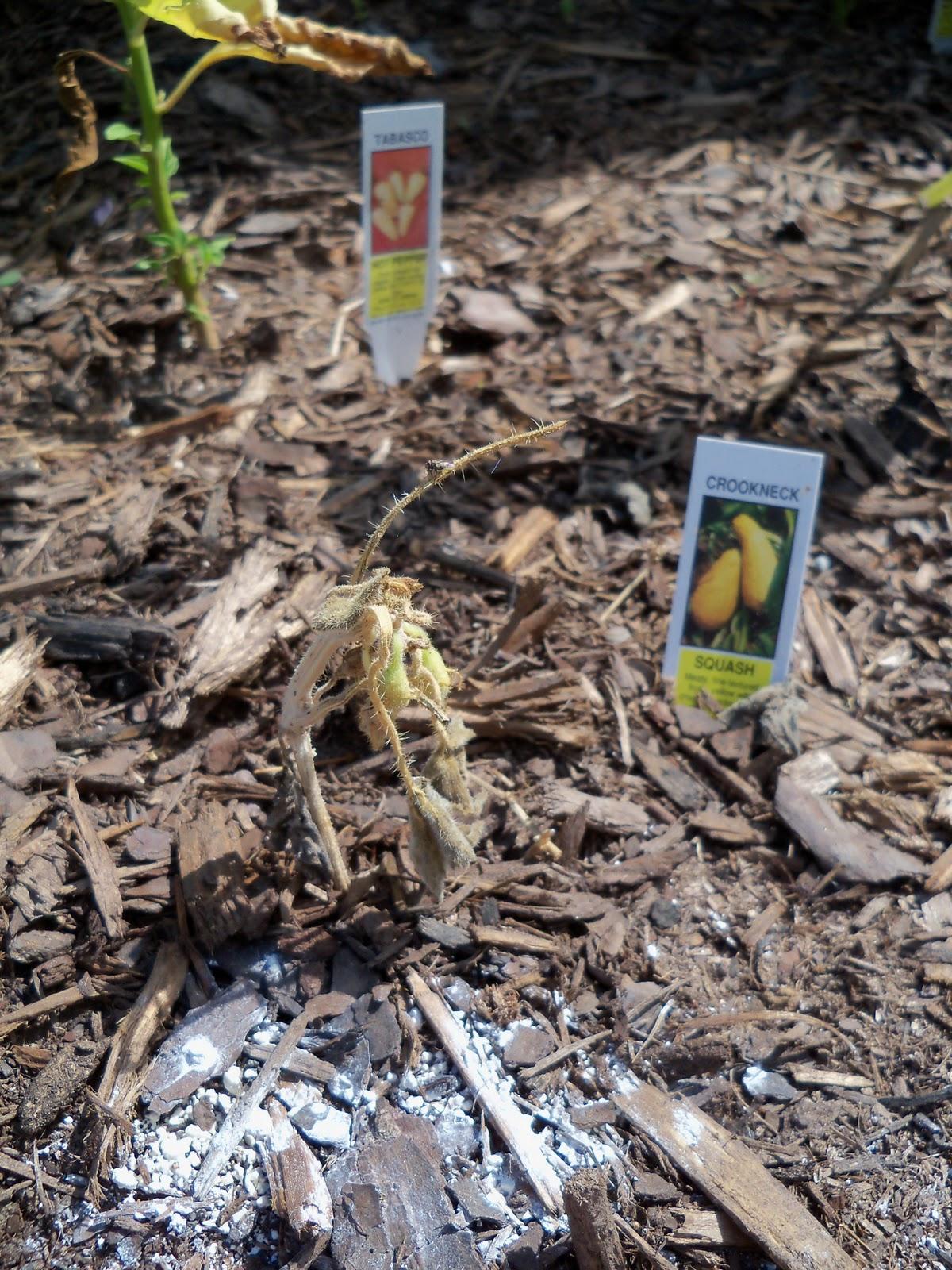Gardening 2010, Part Two - 101_2640.JPG