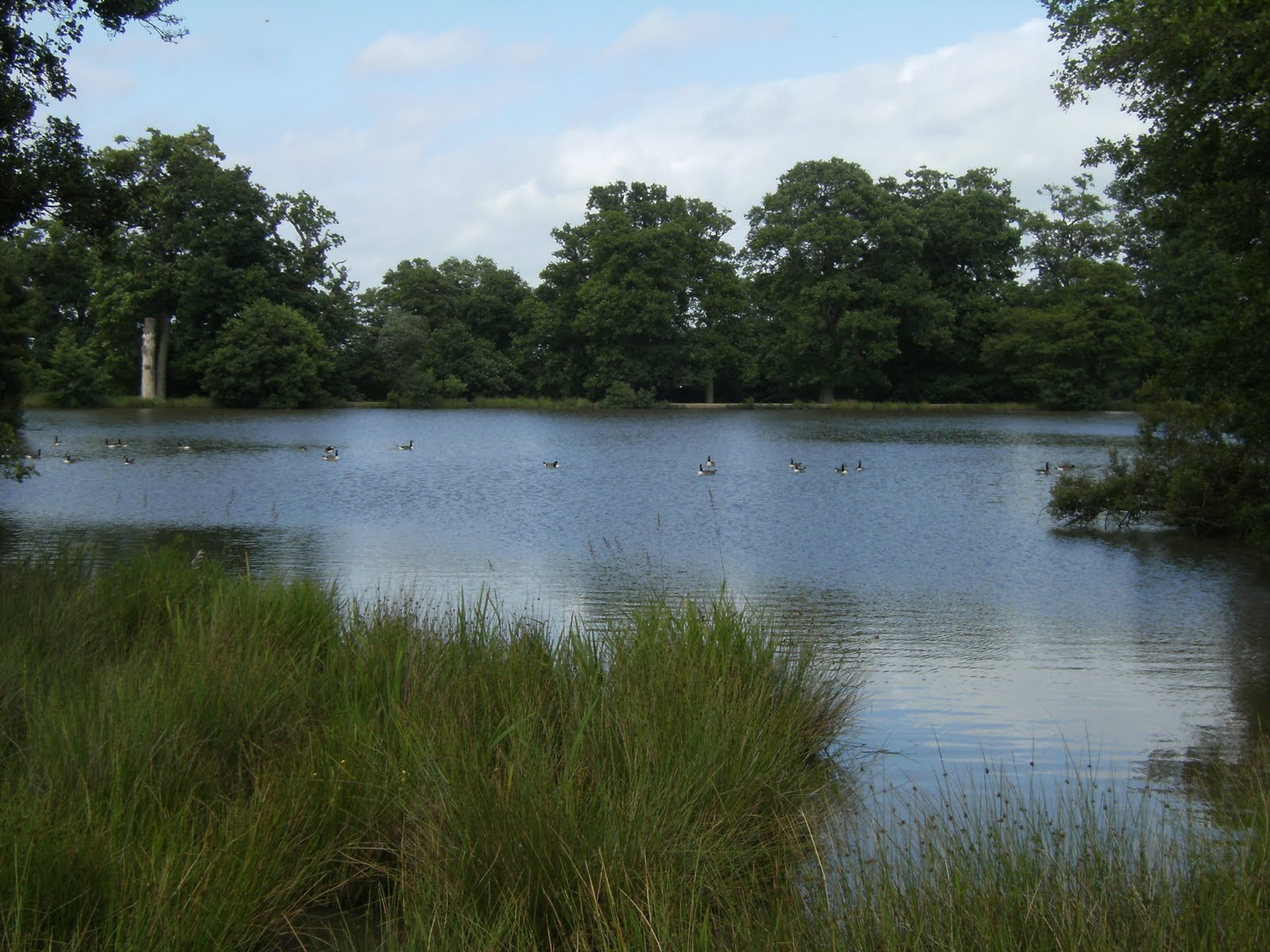 DSCF8695 Lower Pond, Petworth Park