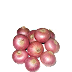 ZopNow - Buy 1 KG Onion at Just Rs.1