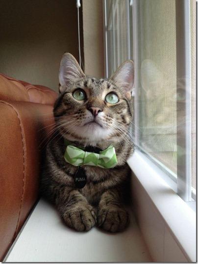st pat's cat2