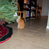 Christmas 2013 - 115_9710.JPG