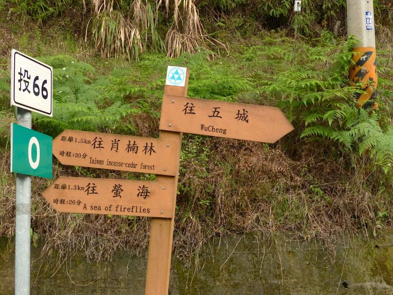 Puli, Nantou county, cueillette de thé - P1050655.JPG