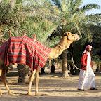 GCC Trip 2013