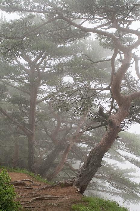 Туманная сюита