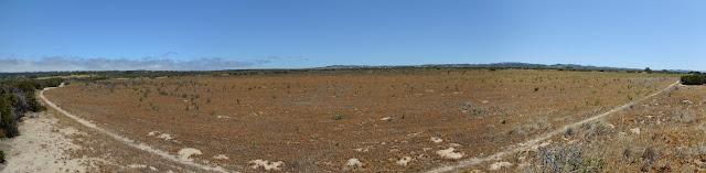 flat pool of dried grass