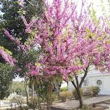 Spring in Kos
