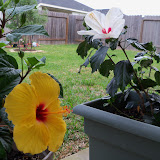 Gardening 2010 - 101_0730.JPG