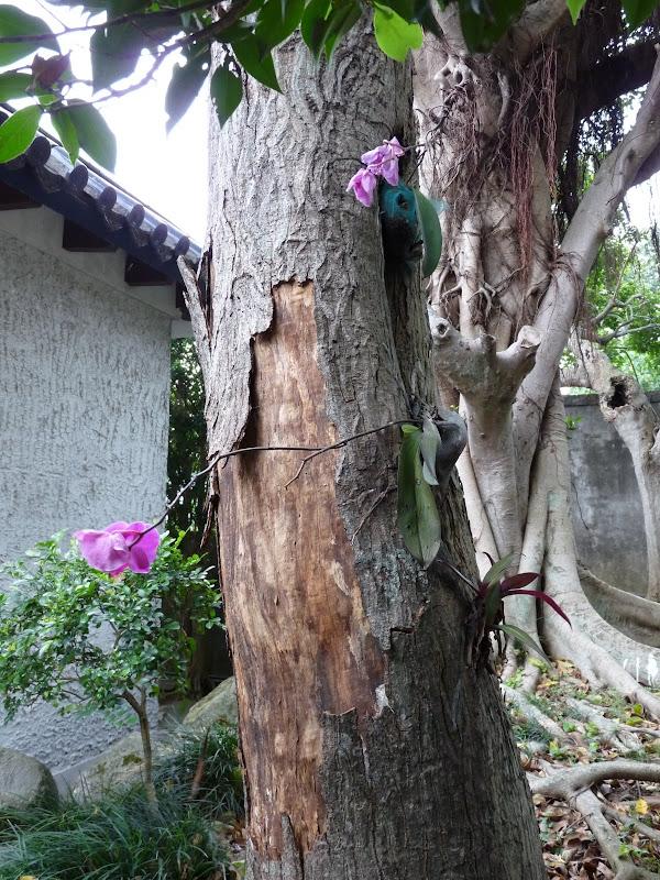 TAIWAN.Taipei Maison de l écrivain Lin Yutang,et divers - P1100493.JPG