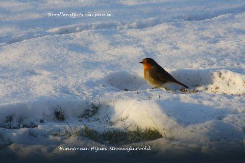 Winterkiekjes Servicetv - Ingezonden%2Bwinterfoto%2527s%2B2011-2012.jpg