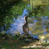 04-07-12 Homosassa Springs State Park - IMGP0056.JPG
