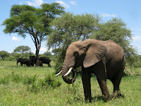 Northern Circuit Safari - Tarangire National Park