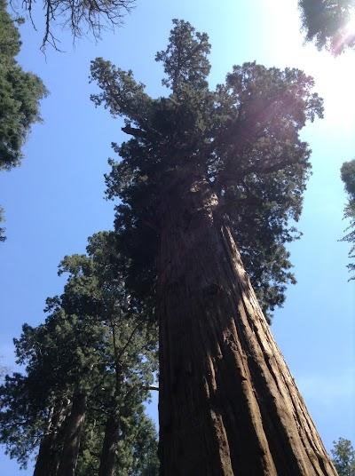 Национальный парк Секвойя, Гигантский лес, гинантская секвойя Гененал Шерман