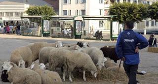 Aïd el adha: L'offre de moutons est importante cette année
