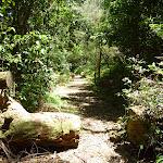 Walking beside Mooney Mooney Creek south of Ausburn Creek (373147)