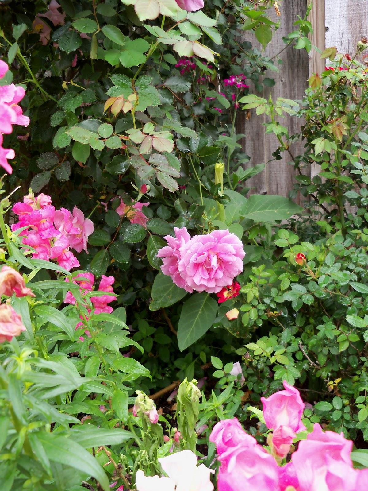 Gardening 2012 - 115_1356.JPG