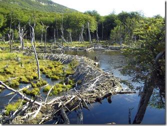 Ushuaia_Parque-Nacional-Terra-do-Fogo-diques-castores