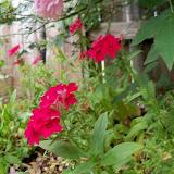 Gardening 2012 - 115_1996.JPG
