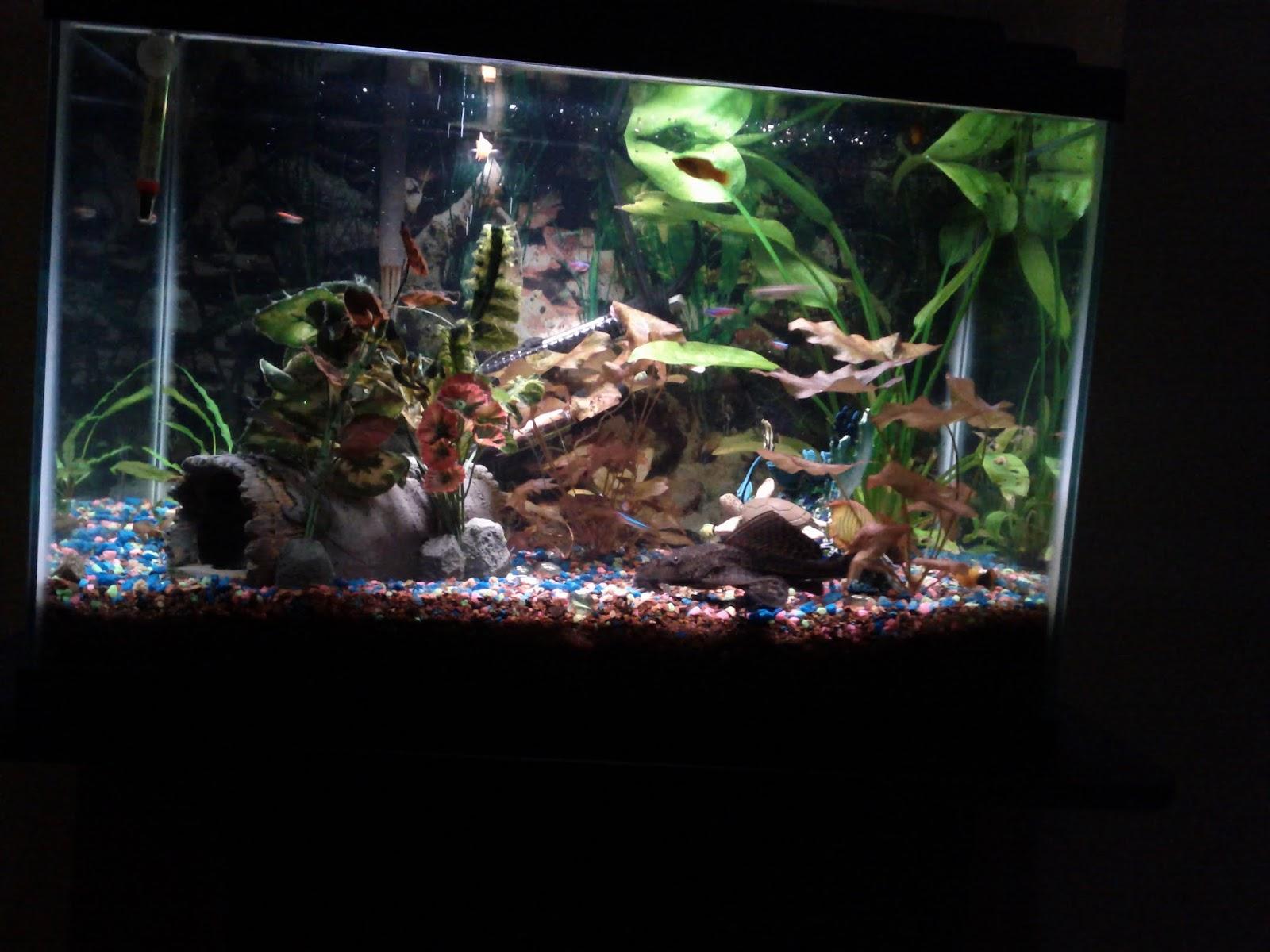 Fish - IMG_20121002_215834.jpg