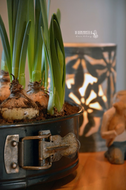 Glücksmomente der Woche_Springform neu bepflanzt