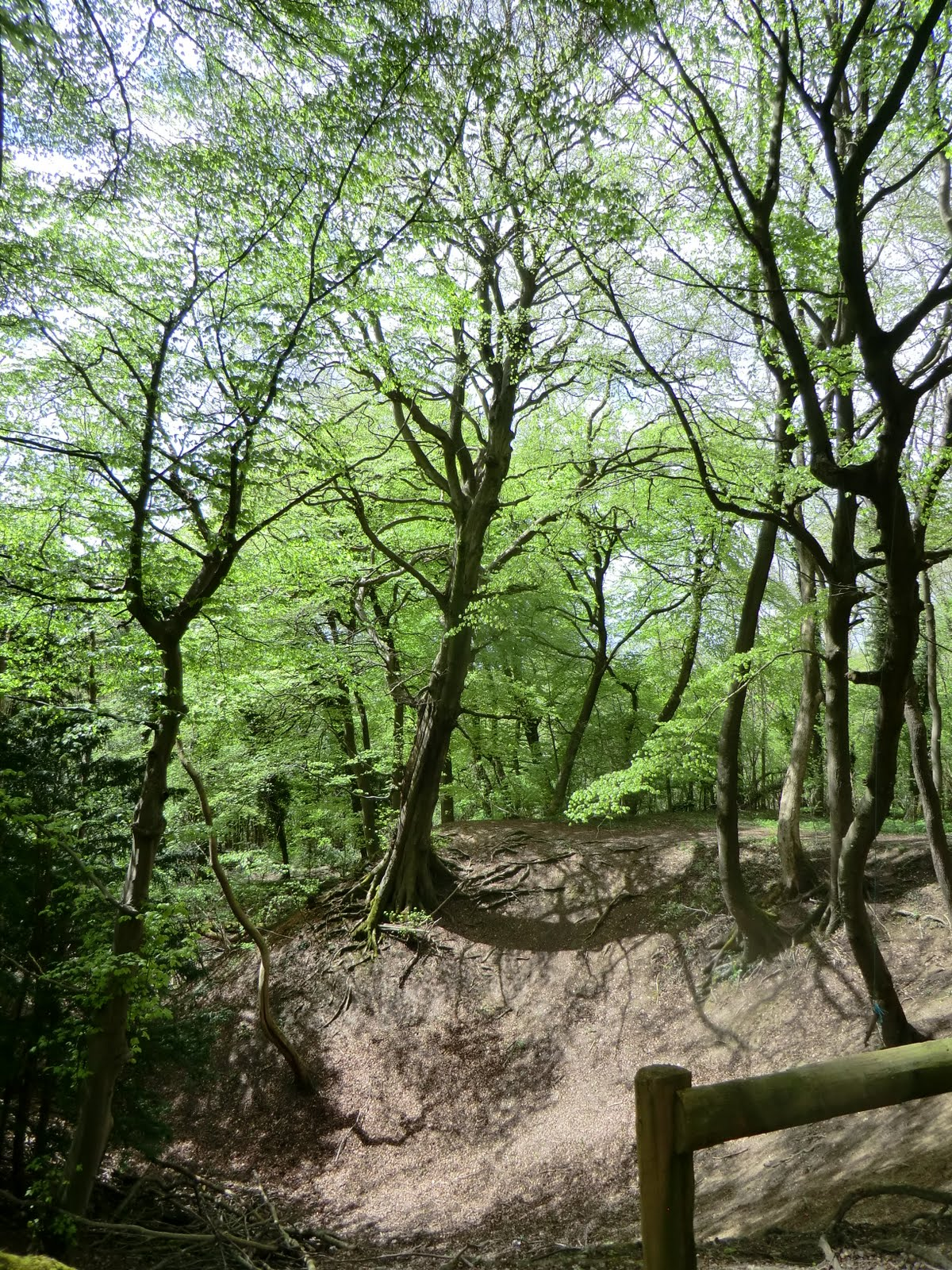 CIMG8012 Marl pit in Marden Park Woods
