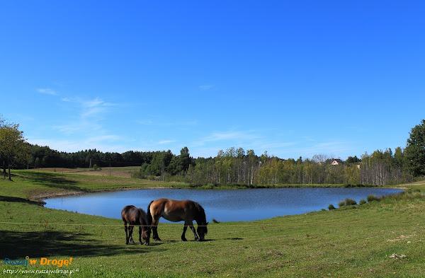 Na trasie Nordic Walking w Pomieczynie