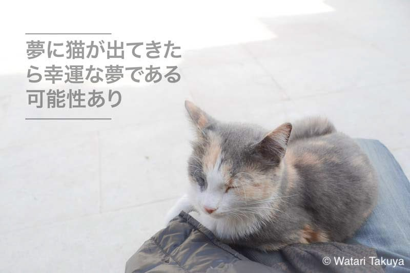 足の上に子猫が載っている写真