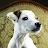 terri smiley avatar image
